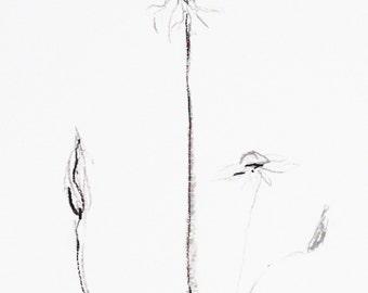 Plant Sketch // A5