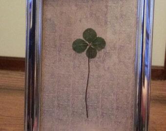 Real four leaf clover in vintage silver-plated frame