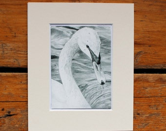 Mini Swan Graphite Drawing Print with Mount - Print of Original Hand Drawn Graphite Pencil Drawing by CottageRts