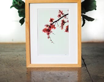 Limited Edition 1 of 7 Signed 11x14 Matted Photograph Print, Minimalist Decor Photograph Modern Art Decor Photograph Simple Home Pink Decor
