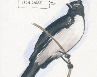 The Willie-Wagtail