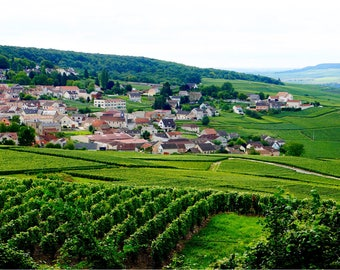 Champagne Vineyards Print, French Winery, Fine Art Photography, Green Wall Art, Travel Photography, Grapes, France - Epernay Vineyards