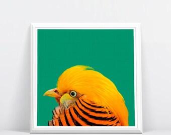 Golden Pheasant Bird, Bird Print, Tropical Bird Wall Art, Tropical Decor, Printable Art, Colourful Bright, Green Orange, Bird Photography