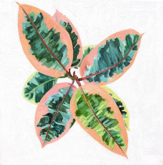 "Original Square Oil Painting: Tricolor Rubber Plant- Ficus elastica tricolor. 12""x12""x1""."