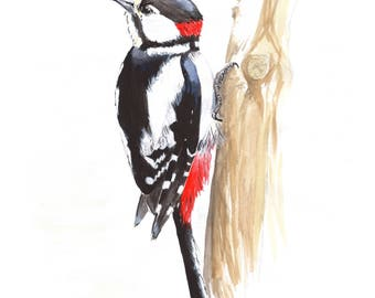 Great Spotted Woodpecker Print - Framed