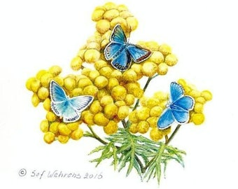 Fine art painting, watercolor, Butterflies, Family