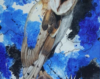 Barn Owl on Blue