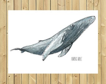 Illustration Humpback whale, size of blade A3, A4 or A5, Humpback whale