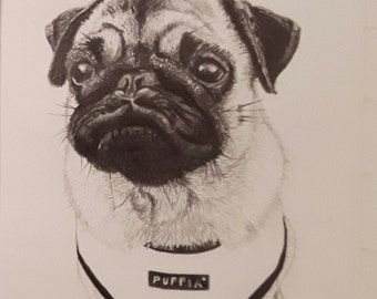 "Custom pencil pet portrait 8 x 6"" Cat/dog/rabbit/any pet!"
