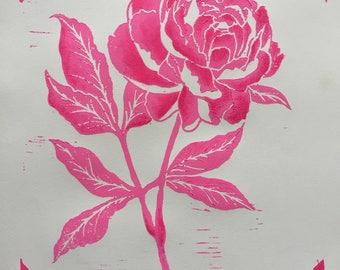 Peony (Pink Multi)