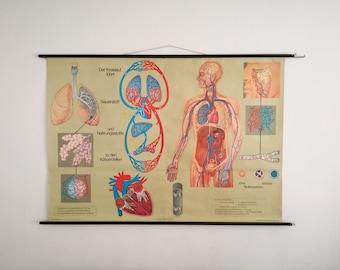 Austrian Vintage School Chart Blood Circulation Anatomy Wall Chart 60s