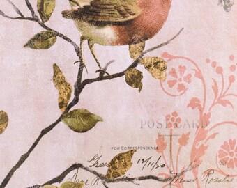 Sparrow Postcard Canvas Art
