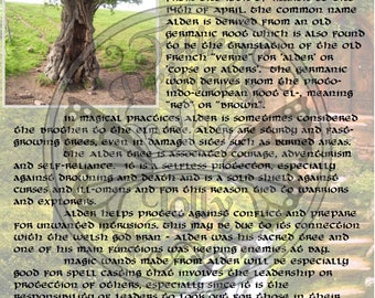 ALDER Tree MAGIC Properties, BOS Instant Download Page, WaND, Bark Scrolls, Book of Secrets, Glamerie Pages