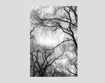 Modern Black and White Weeping Willow Tree Fine Art Photo Wrapped Canvas Wall Art