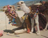 Vintage camel postcards from Turkey - 4x6 - choose lot of 5 or 10