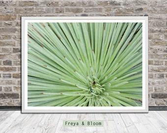 Cactus, mint coloured, Art Photography, Wall Art, Photo Art, Printable Art, Instant Digital Download
