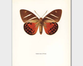 """Unique Butterfly Art (South American Art, 1960s Black and Orange Butterfly Decor) --- """"Sunset Silhouette Moth"""" No. 46-2"""