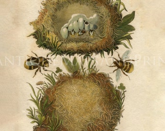 INSTANT DOWNLOAD Bees With Nests Print Your Own 8x10 Ready To Frame