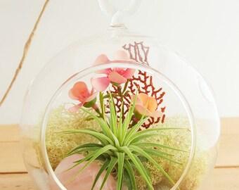 Air Plant Terrarium Kit with Rose Quartz / Tillandsia DIY Gift / Pretty Pink Countryside