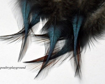 Iridescent Black with red edge Rooster Saddle BB 3-4 inch Short Spear Feather 18 count