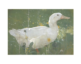 Watercolor Painting of a Duck, The White Drake, Art for Kids,