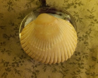 Clear colored glass disk with cream colored ridged shell pendant