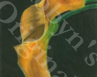Orange Calla Lily Art Print