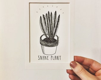 Snake Plant drawing