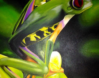 Red eyed tree frog.  Prints only.