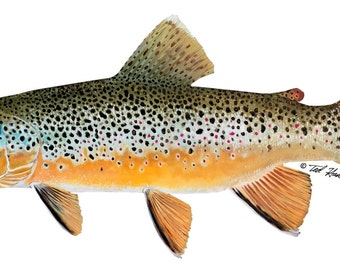 "7"" Vinyl Decal - Brown Trout"