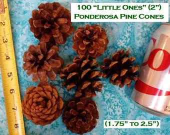 "DIY 2"" Ponderosa Pine Cones ""Little Ones"" Box of 100 (or 200/300)  (1.75"" to 2.5"" long) For Pine Cone Wreaths, Weddings, Pine Cone Crafts"
