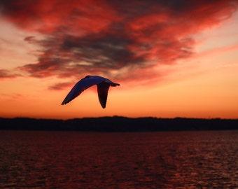 Beautiful bird in sunset photography print. Wall Art Decor