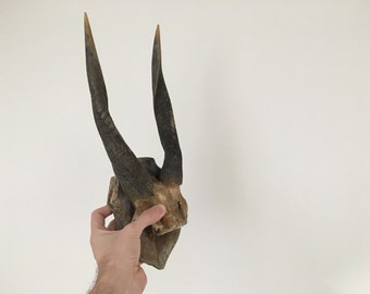 Young Antelope trophy.