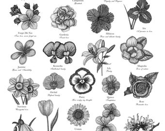The Victorian Language of Flowers A to Z  ~ A3 Limited Edition Print