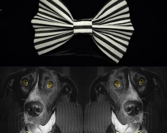 Rayado Dog Bow Tie - Black&White