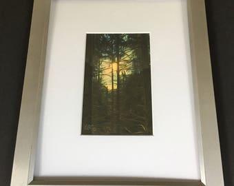 Sun through pine tres on the Appalachian Trail