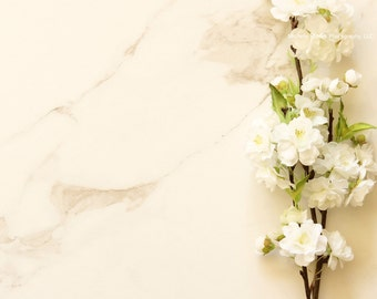 Styled stock photography/blooms/blossoms/spring/nature/JPEG/mock up/brand/blog/website/frame/marble/desk top/seasonal/template/growth/white