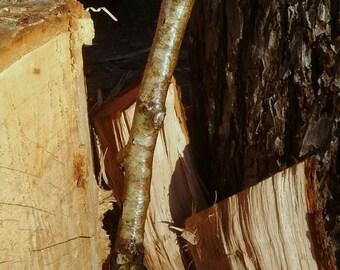 Birch natural edge walking stick hiking pole staff free shipping