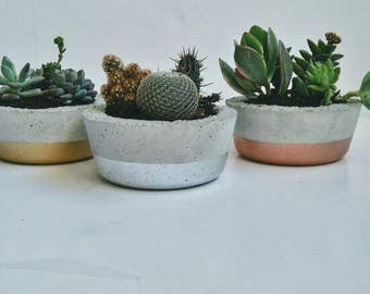Metallic dipped  Succulent/Cacti Bowl