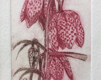 Fritillary ~ Snakesheads ~ Print - Original Limited Edition Etching