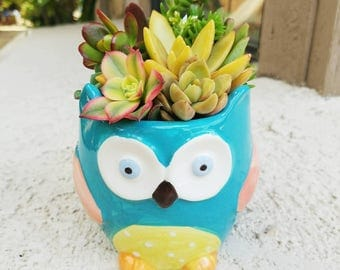 Colorful owl-dorable blue owl pot with living succulent arrangement