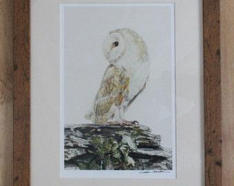 Barn Owl on Wall Art Print