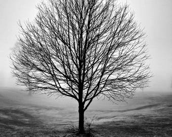 "Solitary Tree Fog Photo, Fog Print, Fall Photo, Tree Photo, Morning Fog Photo, Fall Decor, Tree Silhouette, Nature Photo ""Murky Morning"""