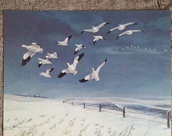 Vintage Snow Geese Art Print