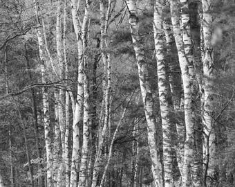 Photography of nature. Polish forest. Wall art. Polish photography. Polish art.