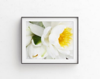 Water Lily Print - Flower Photography - Photography - Water Lily Home Decor - Wall Art - Water Lily Photo - Waterlily - Lilyfied Print