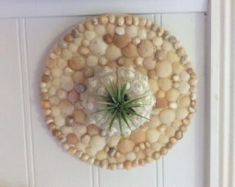 SALE! Shell Encrusted Air Plant Wall Holder Decor, Handmade from Collected Shells Here on Kauai, One Air Plant Included