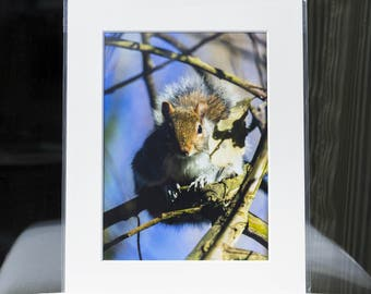 "Mounted Fine Art Photography Print - Grey Squirrel - London (10""x8"")"