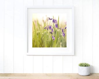 Bluebells wall art, fine art photography, bluebells home decor, bluebells print, botanical print, botanical wall art, flower print