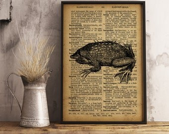 Suriname toad print, Antique frog poster Vintage style Art Decor Coastal wall art, beach house decor Frog Print  R17